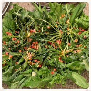 Πράσινη Κρητική σαλάτα